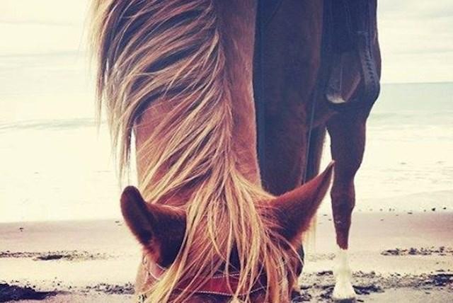 A cavallo del mare al fantini - Bagno fantini cervia ...